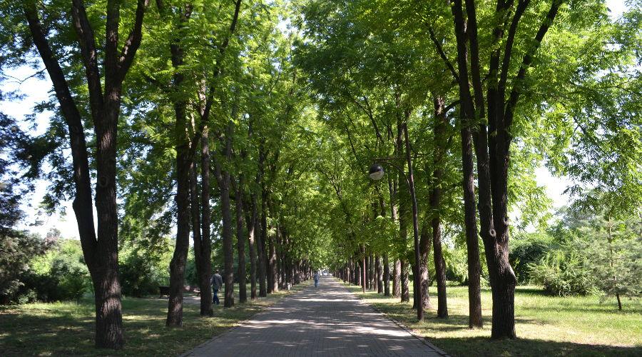 Ботанический сад им. Косенко © Фото Ринаты Фирсовой, Юга.ру