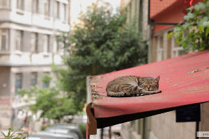Кадр из фильма «Город кошек» ©Фото с сайта kinopoisk.ru
