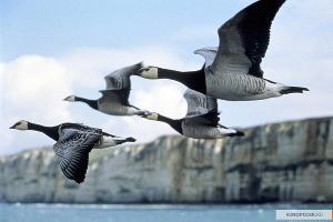 Кадр из фильма «Птицы» © Фото с сайта kinopoisk.ru