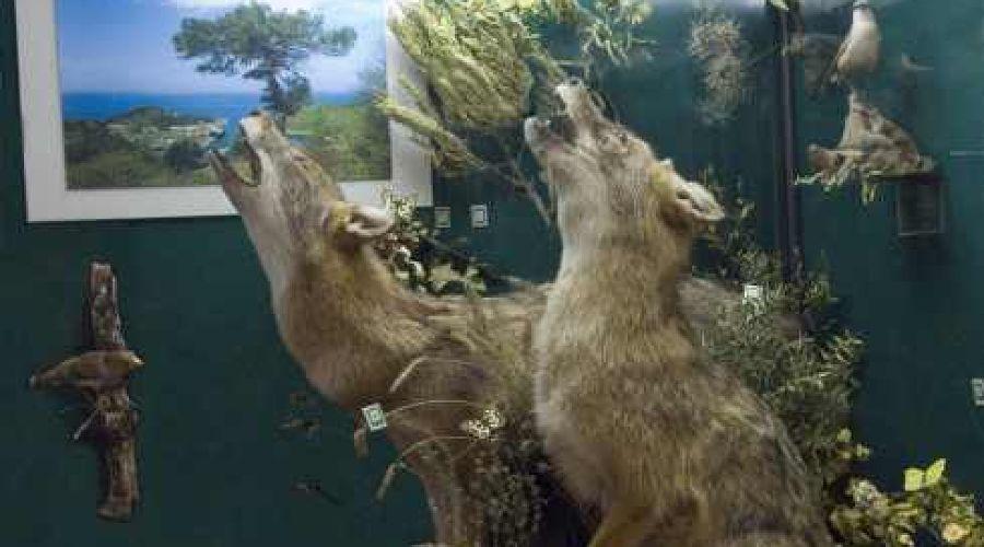 Природа и экология Кубани © http://kultura.kubangov.ru