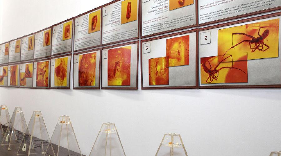 © Фотография предоставлена пресс-службой Краснодарского краевого выставочного зала изобразительных искусств