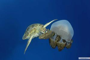 Кадр из фильма «На глубине морской 3D» ©Фото с сайта kinopoisk.ru