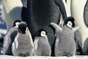 Кадр из фильма «Птицы 2: Путешествие на край света» ©Фото с сайта kinopoisk.ru