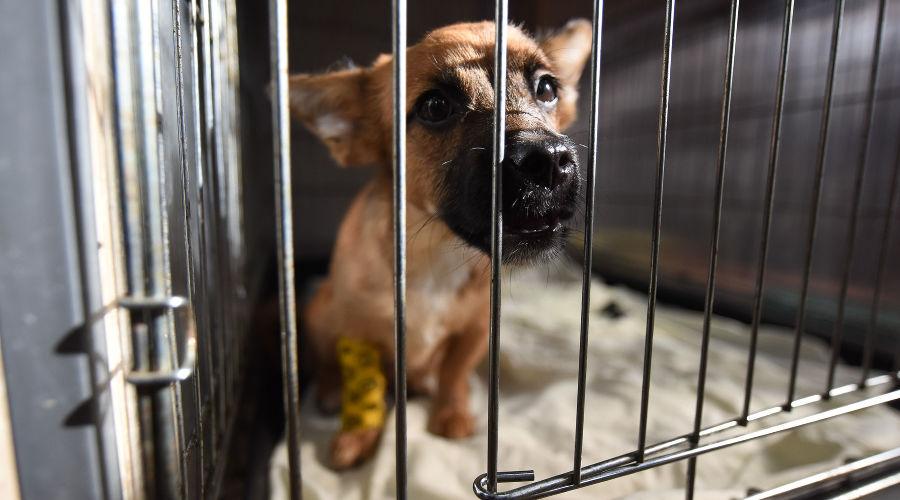 Приют для пострадавших животных «Краснодог» © Фото Елены Синеок, Юга.ру