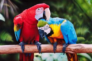 Попугаи © Фото Юга.ру