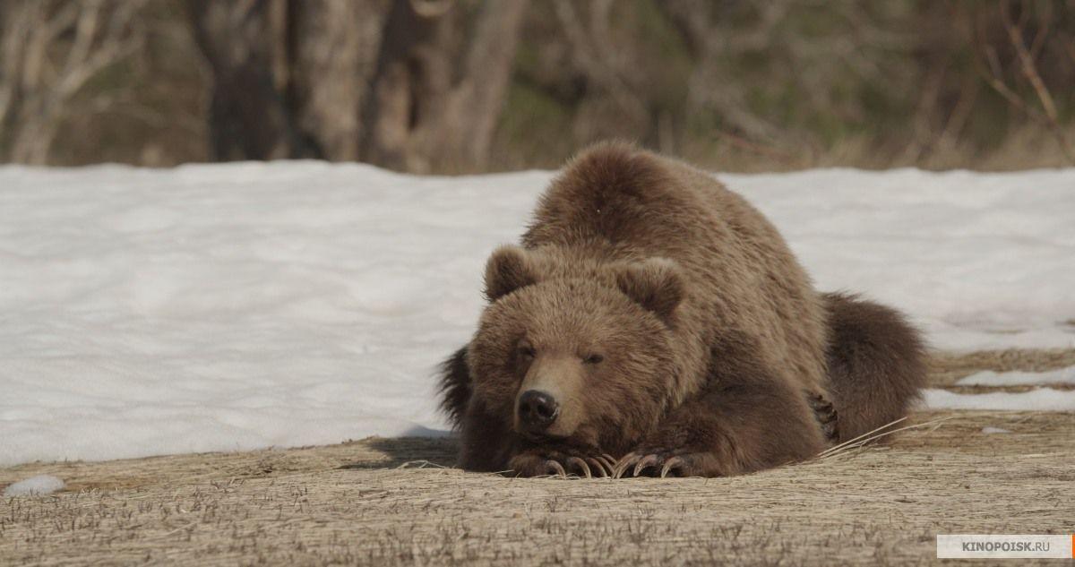 Кадр из фильма «Земля медведей»