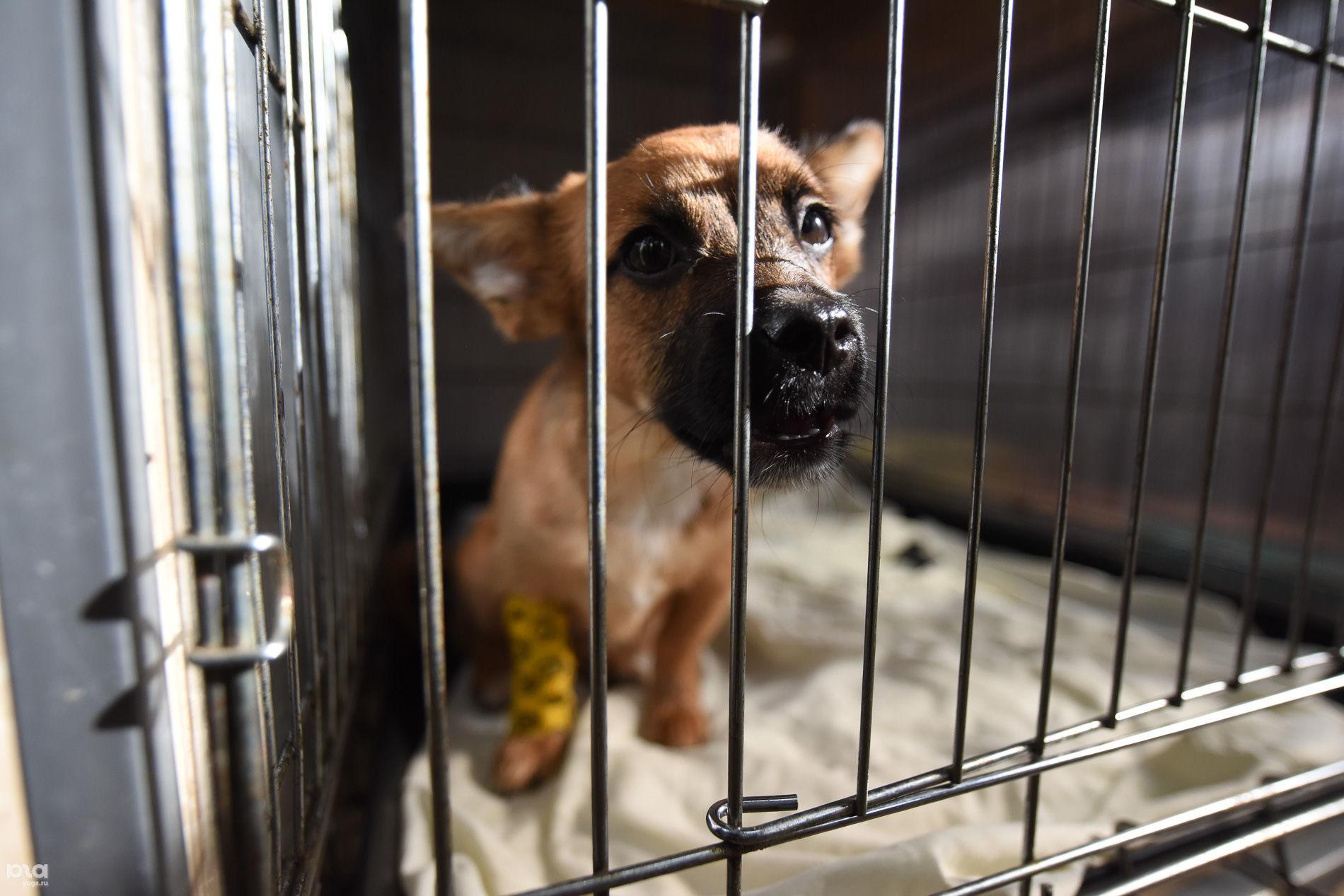 Приют для пострадавших животных «Краснодог»